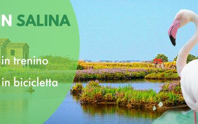 Estate nella Salina di Comacchio: trenino, concerti ed escursioni